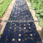 agriculture black mulch film perforated hole
