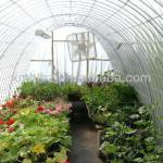Transparent Hotned Plastic Film for Greenhouse