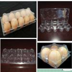 Clear PET plastic egg trays for sale